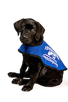 Raising a guide dog puppy for Southeastern Guide Dogs