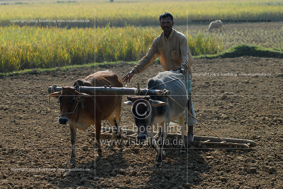 "Asien Suedasien Bangladesh , Anbau von Reis bei Bogra , Bauer pfluegen Feld mit Ochsen   -  Landwirtschaft xagndaz | .South asia Bangladesh , paddy cultivation near Bogra , farmer plough rice field with bullock - agriculture .| [ copyright (c) Joerg Boethling / agenda , Veroeffentlichung nur gegen Honorar und Belegexemplar an / publication only with royalties and copy to:  agenda PG   Rothestr. 66   Germany D-22765 Hamburg   ph. ++49 40 391 907 14   e-mail: boethling@agenda-fototext.de   www.agenda-fototext.de   Bank: Hamburger Sparkasse  BLZ 200 505 50  Kto. 1281 120 178   IBAN: DE96 2005 0550 1281 1201 78   BIC: ""HASPDEHH"" ,  WEITERE MOTIVE ZU DIESEM THEMA SIND VORHANDEN!! MORE PICTURES ON THIS SUBJECT AVAILABLE!!  ] [#0,26,121#]"