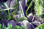 Green palm tree fronds and grey granite boulders, Seychelles