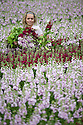 "09/05/15<br /> <br /> With only ten days before the opening of the Chelsea Flower Show, Sanda Ubele (20), checks the quality of stocks being grown for Marks and Spencer's at Collinsons Cut flowers near Kings Lynn in Norfolk. <br /> <br /> The best flowers will be selected for the M&S 'Blooms of the British Isles' stand at the show.<br />  <br /> The exhibit will champion British flowers and growers, showcasing heritage varieties from Peonies and Stocks, which have been around for centuries, to new varieties, such as Orchids, which are now grown in Britain using modern techniques. It willl be opened by Joanna Lumley – the M&S sustainability ambassador.<br /> <br /> M&S Flower Expert, Simon Richards said: ""We are very excited to feature at Chelsea again this year, especially with a theme that is so important to M&S. As a nation we grow some of the world's most beautiful flowers and plants. We want to celebrate these iconic blooms and champion the growers behind them.""<br /> <br /> Chelsea Flower Show opens on May 18th and the stocks are already in stores.<br /> <br /> All Rights Reserved: F Stop Press Ltd. +44(0)1335 418629   www.fstoppress.com."