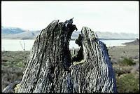 Dead tree at the Lake Argentino in Patagonia.<br /> 24.10.2000, Lake Argentino<br /> Copyright: Christian-Ditsch.de<br /> [Inhaltsveraendernde Manipulation des Fotos nur nach ausdruecklicher Genehmigung des Fotografen. Vereinbarungen ueber Abtretung von Persoenlichkeitsrechten/Model Release der abgebildeten Person/Personen liegen nicht vor. NO MODEL RELEASE! Nur fuer Redaktionelle Zwecke. Don't publish without copyright Christian-Ditsch.de, Veroeffentlichung nur mit Fotografennennung, sowie gegen Honorar, MwSt. und Beleg. Konto: I N G - D i B a, IBAN DE58500105175400192269, BIC INGDDEFFXXX, Kontakt: post@christian-ditsch.de<br /> Urhebervermerk wird gemaess Paragraph 13 UHG verlangt.]
