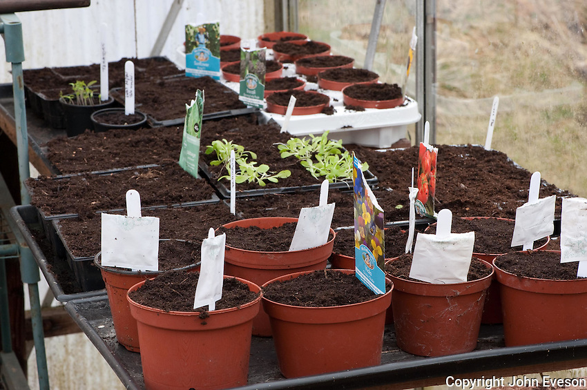Seeds planted in plant pots in a greenhouse.