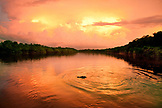 BRAZIL, Agua Boa, Agua Boa River, a crocodile swimming at sunset deep in the Amazon jungle