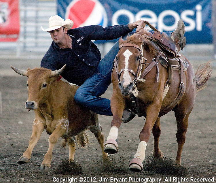 Steer Wrestler Cody Cabral from Hilo, HI., leaps onto a steer at the Kitsap County Fair and Stampede held Aug. 22 to Aug. 26, 2012 in Silverdale, WA. ©2012. Jim Bryant Photo. All Rights Reserved.