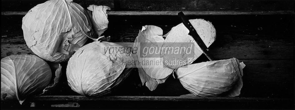 Europe/France/Alsace/67/Bas-Rhin/ Krautergersheim: Une choucrouterie chez Monsieur Pfleger, producteur de choucroute- Détail de choux