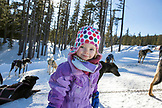 USA, Oregon, Bend, a young girl plays with the sled dogs after getting back from her sled ride around Mt. Bachelor