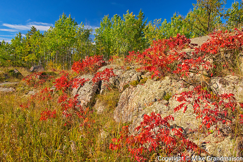 Sumac in autumn color on Precambrian Shiled<br />