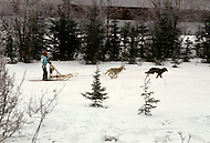 Anchorage Area, Alaska, U.S.A, January 1989. A sudden cold wave struck Alaska resulting to the temperature falling under 50 degrees Centigrade (58 degrees Fahrenheit). Junior Sled dog races.
