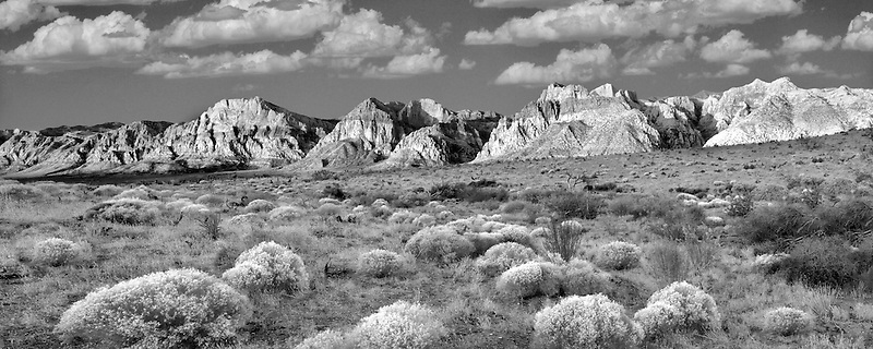 Rabbitbrush and rock formations in Red Rock Canyon National Conservation Area, Nevada. Sky has been added.