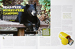 Nelson Kenter photo of a black bear lying on a picnic table in a campground used in a story about keeping a clean camp