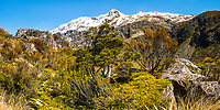 Alpine vegetation and Southern Alps in Otira Valley, Arthur's Pass National Park, West Coast, New Zealand, NZ
