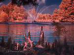Cedar Roots and Fountain in Forest Park (Infrared) ©2016 James D Peterson.  This huge and well-maintained park in Saint Louis provides many fine scenes for infrared photography.