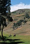 Amérique du Sud. Equateur. Trekking sur les volcans d'Equateur. Cavaliers dans la région de Tigua.South America. Ecuador. Trekking on the volcanoes