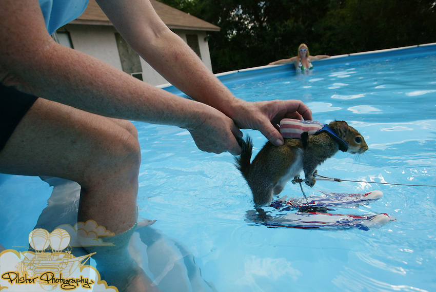 Lou Ann Best <cq>, helps Twiglet, the squrrel replacing Twiggy #5, get started waterskiing as Dinah Greenwood <cq>, right, who's pool Best uses, watches Friday September 22, 2006, in Deltona. Twiggy is an internationally known water-skiing squirrel. Lou Ann Best <cq>, Twiggy's owner, travels all around the world to show what Twiggy can do and to promote water safety. Currently Best has five squirrels and she's slowly working on retiring Twiggy #5 and bringing Twiggy #6 into the show. (Daytona Beach News-Journal, Chad Pilster)