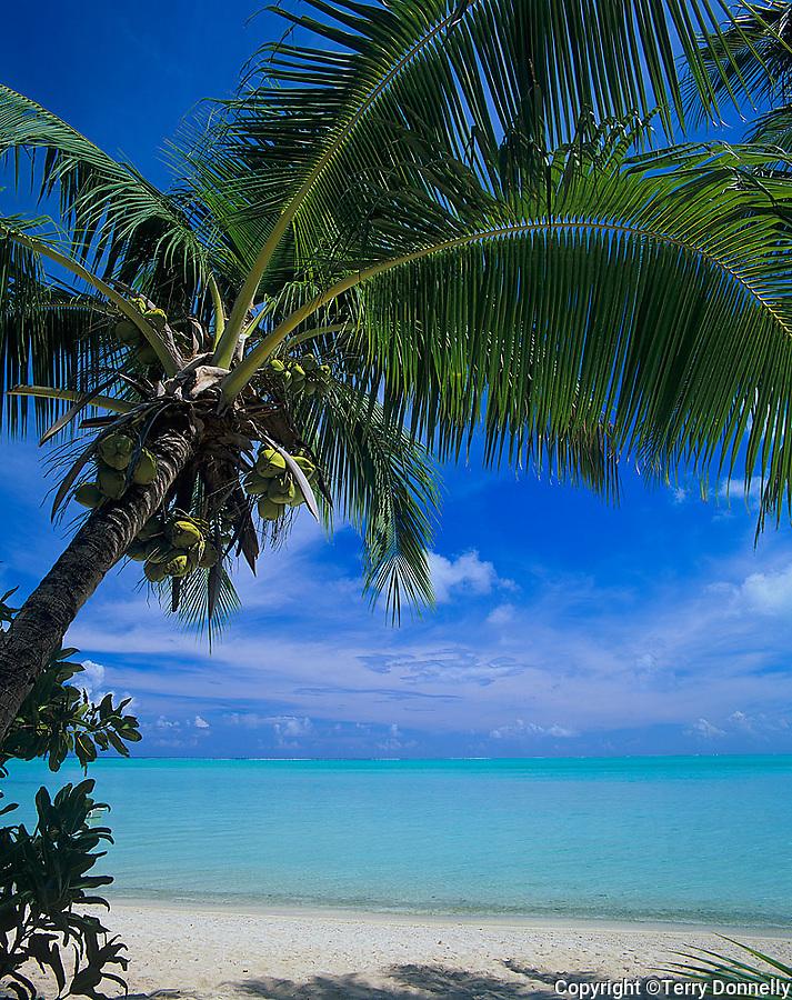 Bora Bora, French Polynesia   <br /> Coconut Palm trees (Cocos nucifera) on Matira beach<br /> with the tropical waters of Bora Bora lagoon