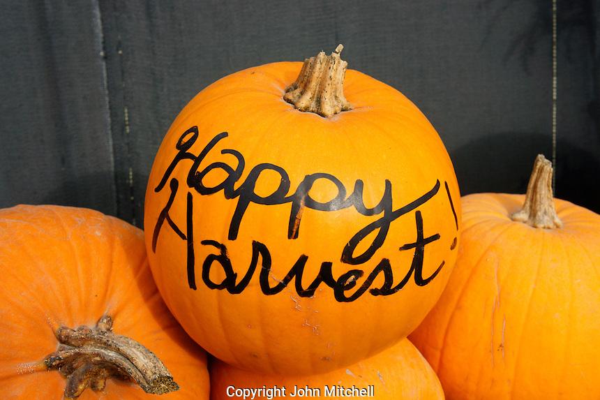 October harvest Display of pumpkins Ladner, British Columbia, Canada