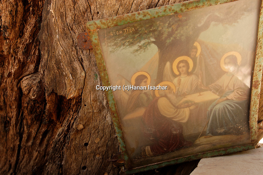 Judea, an icon by the the trunk of Abraham´s Oak (Kermes Oak) at the Russian Orthodox Church in Hebron. . .