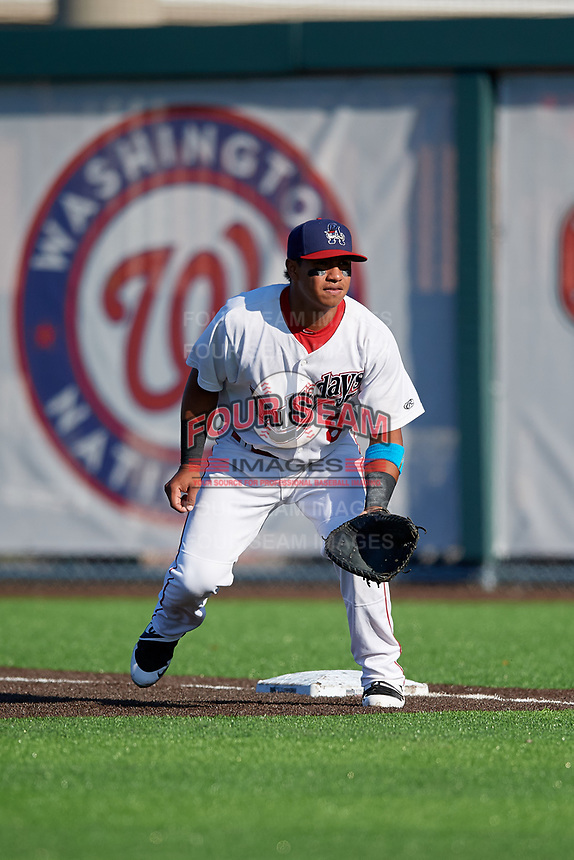 Auburn Doubledays first baseman Adalberto Carrillo (8) during a NY-Penn League game against the West Virginia Black Bears on August 23, 2019 at Falcon Park in Auburn, New York.  West Virginia defeated Auburn 8-1, the first game of a doubleheader.  (Mike Janes/Four Seam Images)