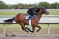 #122Fasig-Tipton Florida Sale,Under Tack Show. Palm Meadows Florida 03-23-2012 Arron Haggart/Eclipse Sportswire.