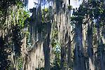 Spanish-moss, Parque Nacional Los Haitises
