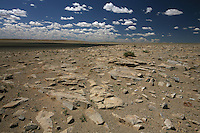Mongolia Deserto del Gobi _ deserto pietroso