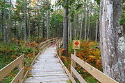 Pondicherry Wildlife Refuge - Boardwalk along the Mud Pond Trail in Jefferson, New Hampshire during the autumn months. Sections of this boardwalk were built so wildlife could still cross it.