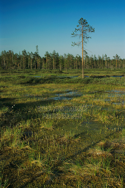 Moorland, Pyhätunturi National Park, Finland, July 2001
