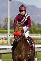 Joel Rosario aboard Tiz Flirtatious winner of the John Deere Cal Cup Distaff (Division 1) at Santa Anita Park in Arcadia, California on October 13, 2012.