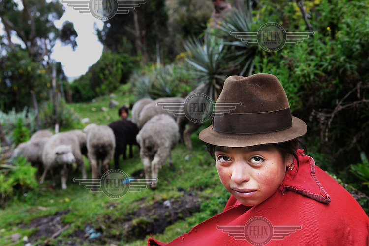 A girl shepherd looks after her sheep. The Ecuadorian Andes region is known as La Sierra and includes the Andes Mountains.
