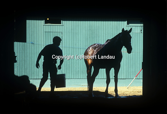 Trainer washing race horse in stables at Santa Anita Park