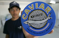 Uruguay's Edgardo Mesquita holds a Caviar of Siberian sturgeon in the company of Sturgeon of the Black River, to some 285 kms, to north of Montevideo, Uruguay,Thursday,Nov.17,2005.  The Uruguayan caviar exports mostly to the United States and is put in equilibrium to come to be the toast of the gastronomes of the world. .Photo/Marcelo Hernandez