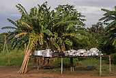 Xingu Indigenous Park, Mato Grosso State, Brazil. Aldeia Aweti. Bright clean shiny pots and pans.