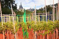 """Festival International des Jardins de Chaumont-sur-Loire, thème de l'année 2010, Jardins corps et âmes : jardin """"Labyrinthe de la mémoire"""" par Anne et Patrick Poirier, petit vignobles et tuteurs colorés. (Mention obligatoire  Festival des Jardin de Chaumont-sur-Loire et des créateurs des jardins et pas d'usage publicitaire sans autorisation préalable) // Festival International des Jardins de Chaumont-sur-Loire, theme of the year 2010, """"Jardins corps et âmes"""" : garden """"Labyrinthe de la mémoire"""" by Anne & Patrick Poirier (the artistes Must Be Credited and the Festival International des Jardins de Chaumont-sur-Loire)"""