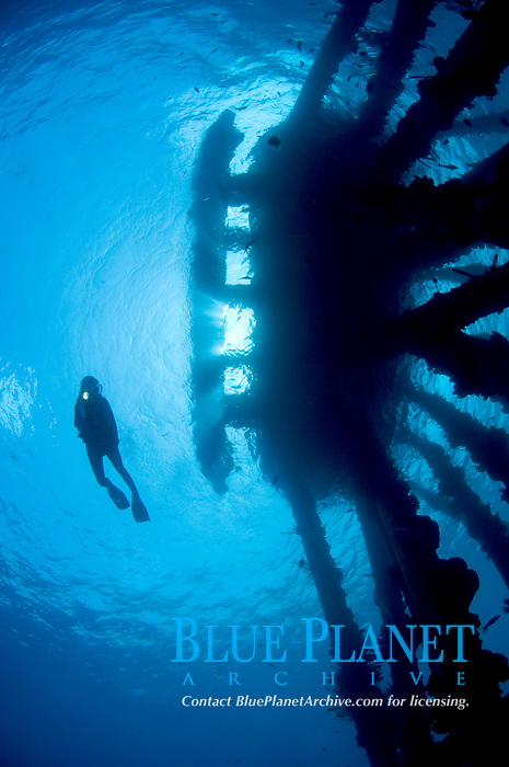 A female diver silhouettes near the Salt Pier, Bonaire, Netherlands Antilles, Caribbean Sea, Atlantic Ocean, MR