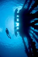 A female diver silhouettes near the Salt Pier, Bonaire, Netherlands Antilles, Caribbean Sea, Atlantic Ocean, MR