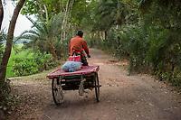 Bangladesh, Jhenaidah. Man drving his cart down the road.