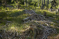 FOREST_LOCATION_90128