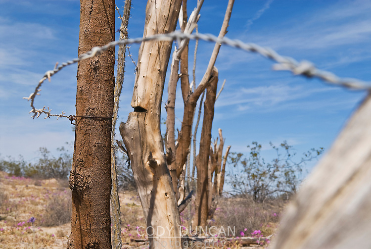 Old makeshift barbwire fence in Baja California