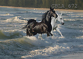 Bob, ANIMALS, collage, horses, photos(GBLA672,#A#) Pferde, caballos