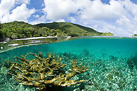Split level view of elkhorn coral.Trunk Bay, St John.Virgin Islands National Park