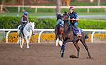 OCT 25: Breeders' Cup Filly & Mare Turf entrant Castle Lady, trained by Henri Alex Pantall, gallops at Santa Anita Park in Arcadia, California on Oct 25, 2019. Evers/Eclipse Sportswire/Breeders' Cup