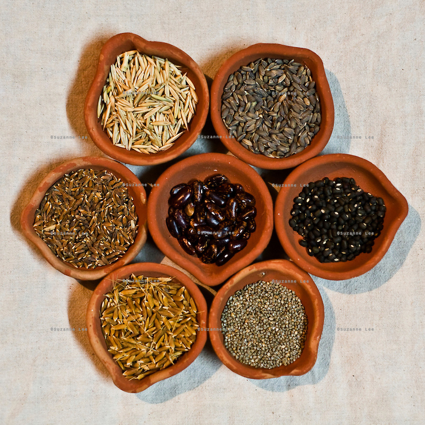 An array of dried crop harvest is displayed in Navdanya in Dehradun, Uttarakhand, India, on 6th September 2009...Dr. Vandana Shiva, the founder of Navdanya Foundation and Bijavidyapeeth, is a physicist turned environmentalist who campaigns against genetically modified food and teaches farmers to rely on indigenous farming methods.. .Photo by Suzanne Lee / For The National