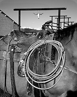 Working cow horse takes a breather at the Red Feather Ranch. .