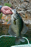 Crappie. Brownlee Reservoir on the Snake River above Hell's Canyon is considred Idaho's best fishing impoundment.  Crappie, bass, catfish, and trout are available in this popular impoundment bordered by Oregon and Idaho.