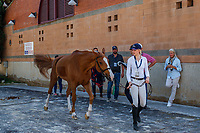 USA-Eve Jobs presents Venue d'Fees Des Hazalles during the Horse Inspection. 2019 ESP-CSIO Barcelona - Longines FEI Nations Cup Jumping Final. Wednesday 2 October. Copyright Photo: Libby Law Photography
