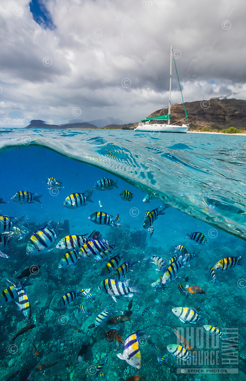 Reef fish, with sailboat in background, West O'ahu