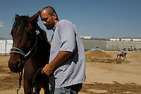 Bonds form between inmates and horses when mustangs are gentled at the Warm Springs Correctional Center, a minimum security prison.  <br /> The horses and inmates learn life lessons.  Horses learn from repetition and adjust to new things. As Hank says, &quot;It's about as exciting as watching paint dry.  We bore them into submission.&quot;