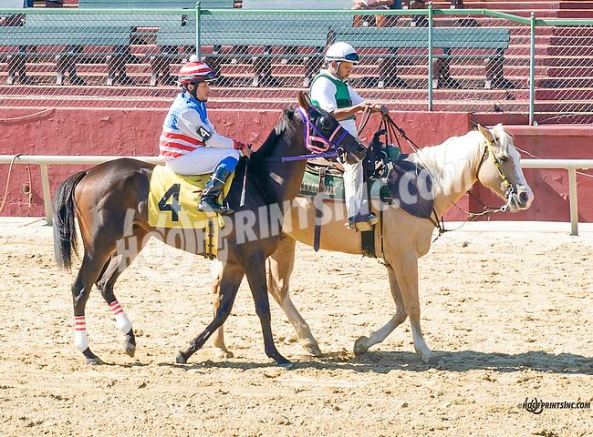 Burning Wild before The Longines Gentlemans International Fegentri race at Delaware Park on 9/14/15 - Mr. Jerry Ortega aboard