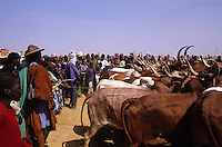Peul (Fulani) herdsmen from Macina cross the Niger river with their cattle. This event, crossing the waters, recalls two myths: the ancestors of the Peul's journey from India, during which they crossed the Red Sea to reach Africa, and the origin of the cow which, according to an African myth, sprang from the water..A very important ritual which, not by chance, coincides with Mali's national day (21.10)..