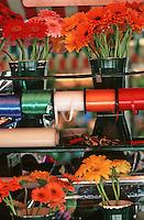 France/06/Alpes Maritimes/Nice: Cours Saleya, marché aux fleurs